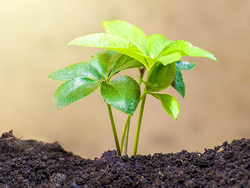 prodotto-sostenibile-ecologico-ambiente-laminil-isonova